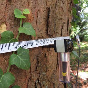 Alat Uji Pohon