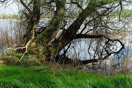 old-pasture-tree-old-nature-thumb